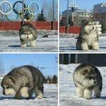 """@9GAG: Is it a dog, a bear, or a Pokémon? http://t.co/iNTNQTzp6l http://t.co/Q3yE4f1tvC""  น่ารักกกกก"