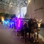 Loved seeing a convoy of horse-drawn carriages in the #Sofitel #Melbourne driveway this evening. #beautiful #horses http://t.co/9AjyMZDR86
