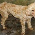 Cão dado como morto se recupera, é batizado de Fênix e vira guarda de canil http://t.co/kcG1qARlSq #G1 http://t.co/piDIv2t3jL