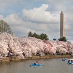 #FactFriday 103 years ago today, two cherry trees were planted in #DC to celebrate Japans gift of 3,020 trees! http://t.co/IM0GWlD5aw