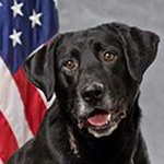 """Barney, the Tacoma narcotics K9 killed by ingesting meth, remembered as a """"phenomenal dog"""": http://t.co/ikrGTZrUgd http://t.co/so6FTjFnHN"""