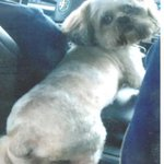"""#LAPD looking for 3 suspects who stole #therapydog """"Maximus"""" in 600 blk of E. Washington St in #LA. Call @LAPDNewton http://t.co/QIACm40QM9"""