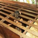 Polícia resgata 54 animais em estado de abandono; dono pagará R$ 156 mil http://t.co/EzIt2Ubefq #G1 http://t.co/U7memR7E8L