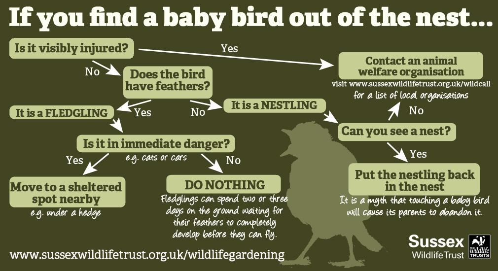 What to do if you find a baby bird out of the nest. Please share. #Easterwatch http://t.co/ws7e9dWO3i
