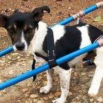 Após ser atropelada em MG, cachorrinha ganha cadeira de rodas http://t.co/K10NSq2gaZ #G1 http://t.co/921POQ3Vat