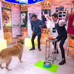 #FritzTheDog really tried to catch something w/ @CameronMathison this morning!  http://t.co/MdZQrDshNj