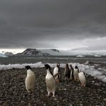 Antarctica may have just set its highest temperature ever recorded http://t.co/S9qXLrmJuY http://t.co/17HfyDRTxw