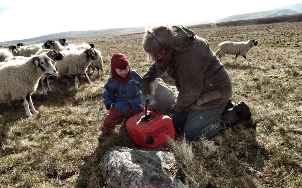 Mineralised molasses for the sheep.🐑🐑🐑 It's sticky & terribly messy but boy do they LOVE it. http://t.co/NL1IcZdrBn