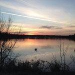 Happy Weekend Milton Keynes #willenlake @TheParksTrust http://t.co/zjNuCQV1Le