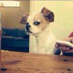 """""""@RoberVidal: Tu cara cuando alguien que te cae mal hace una broma. http://t.co/3wwl69OUau"""""""