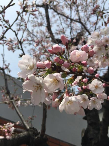 すっかり春 http://t.co/4XPzE8tMtk