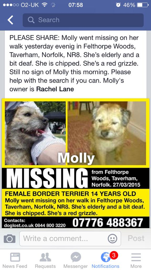 """@petsarefound: #MISSING Border Terrier #Dog Taverham #Norfolk #UK ""@Mollycutedog01: Please share #btposse http://t.co/ubFYQNIRo8"""""