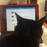 Having a little difficulty this morning as Pickle wants to join #surreychat! http://t.co/wVLBQjNgvO