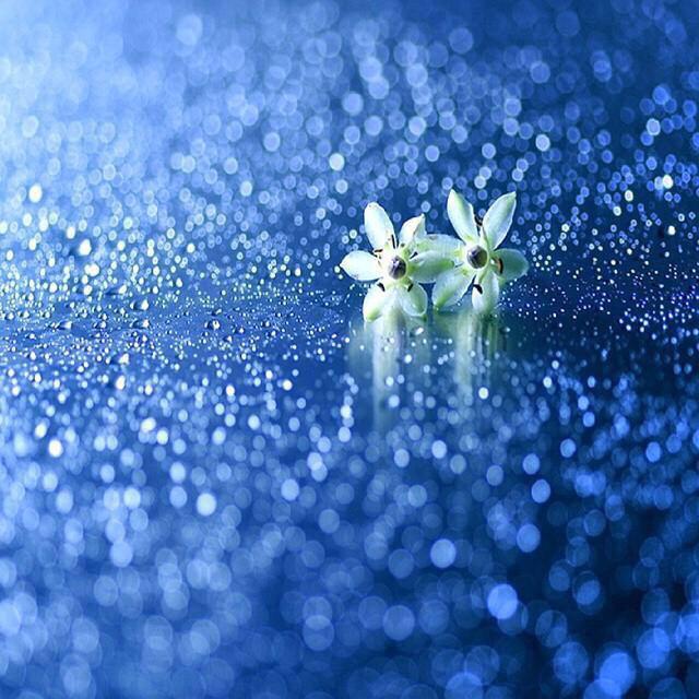言の葉の庭に散りばめられた言葉たち素敵な言葉にも沈んだ言葉にもどんな言葉にもそれぞれの想いってあって…文字にしたい瞬間っ