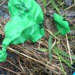 Natuurlijk ook weer ballonnen tijdens #dordtschoon. #McDonald doet ook mee aan de vervuiling van de Dordtse natuur http://t.co/PWVhp6vIFG
