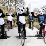 Pandas & people powering #LivingPlanetCentre until 4pm today in #Woking. Come along if youre around! #EarthHourUK http://t.co/w3aou60SHS