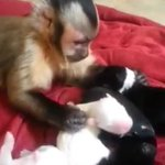 Monkey delicately pets puppies in possibly the cutest moment in all recorded history http://t.co/3fd876kUy3