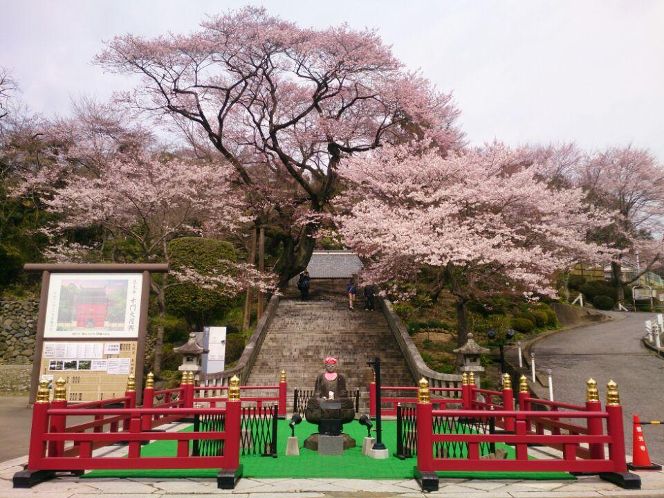 赤門通りの慈光寺のエドヒガンザクラがきれいに咲いています。 #宇都宮 http://t.co/YxchO4s9ZD