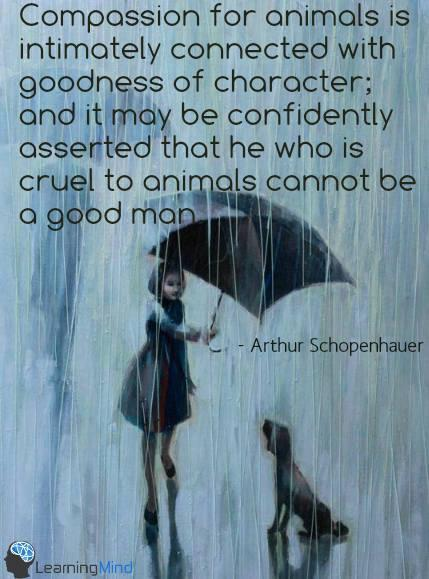 Kindness or Cruelty. It's a choice. One is courageous, one is cowardly. Choose well. http://t.co/AydYKXR80f