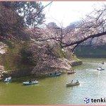 【あったかーい春風 花には雨が】 http://t.co/fKGjjYlBGu 今日の日本列島は寒気を伴う気圧の谷が通過。本州から北海道にかけて雨が降りやすい見込み。気温は、多くの.. http://t.co/qYTTM908n7