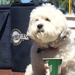 """@Cut4: One year later, #BallparkPup is back: http://t.co/76EotkitUO http://t.co/x3Ln3tbMei"" fav baseball story of 2014"