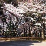 おはようございます。出勤時、上野公園はもうブルーシートが… http://t.co/IbjsF94rCW