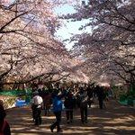 ????????????花に導かれて、このまま上野動物園にご来園いただける…とか…???????????? http://t.co/1KCHf7XXjC