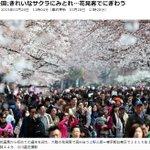 http://t.co/akcwmrxQOf #東京 都内でも #桜 が見ごろを迎えつつあります。開花後、初めての週末で #上野 恩賜公園(台東区)もにぎわっています。今日は午後から雨の予報なので、お出かけはお早めに。#花見 #サクラ http://t.co/JPow988llE