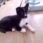 Репост ✊ Кому нужен щенок черно-белого окраса, девочка? Сидит в ветеринарке до вечера на усыпление(😔 444500 http://t.co/oA2gwlfghY