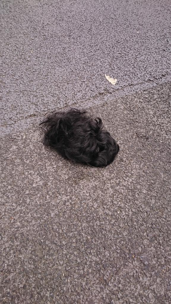 歩行者天国に何か落ちてた http://t.co/tgQ595Mheu