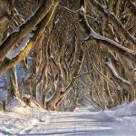 #DarkHedges ranked in worlds best fairy-tale destinations by @DailyMailUK. #GameOfThrones http://t.co/NZOoffmsVl http://t.co/OVvHJX7GvY
