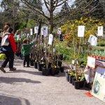 Cette manifestation réunit des pépiniéristes collectionneurs au jardin des plantes #montpellier jusquà 18h http://t.co/z5yNqhdH3x