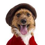 SP tem feira de adoção para apaixonados por pets; ainda dá tempo participar http://t.co/DJD4V54xfL http://t.co/Hl7lOpeNTt
