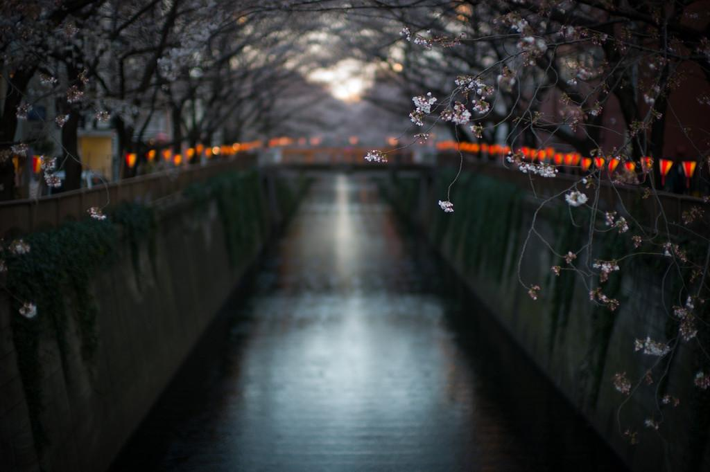 My favorite Cherry Blossom photo from a few years ago... http://t.co/U7e5UnBouL