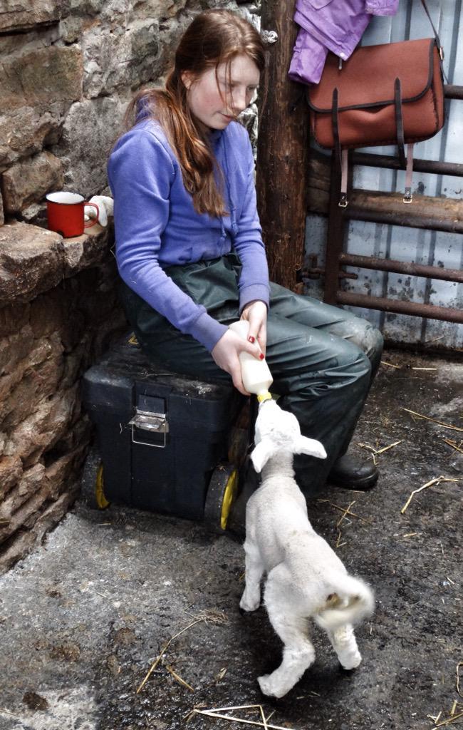 No shortage of helpers with pet lamb duties. http://t.co/pRCVv9CqrC