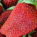 Pesticide banned worldwide still used to grow 70% of Australian strawberries http://t.co/Re6RR2vhil | @abcnews http://t.co/njzXfq3rp8