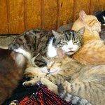 猫はトルコの異国情緒によく似合う【画像多数】 http://t.co/PGmWlwGH08 http://t.co/atilajWKMl