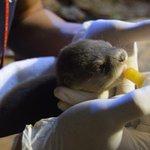 Meet baby otter Ginger @DubaiAquarium & Underwater Zoo! http://t.co/8QlhehgrsN #Dubai #Easter http://t.co/TLF5MytL41