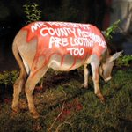 """Donkeys in #Nairobi have been painted with slogans like """"corruption is bleeding Kenya dry"""" http://t.co/PvhFJelfSH http://t.co/OJCMBnP0Mj"""