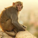 Monkey attacking train drivers in Bihar is seeking revenge, say officials http://t.co/lxKJoKdSqH http://t.co/Kf2HEqMOdg