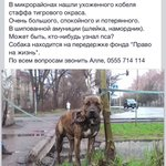 Жаль пса, может кто видел? http://t.co/F8G6idkC9O