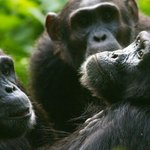 7 days safari in Uganda to give the chance to enjoy some of the beautiful places of Uganda. http://t.co/ZwHvn4dZBx http://t.co/Rg1pm8NUNg
