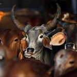 .@narendramodi government to push for cow slaughter ban across India http://t.co/ggr6HDzbrs http://t.co/TGO24wiHAU