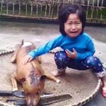 """@MailOnline: Five-year-old girl recognises her missing dog in meat stall in Vietnam http://t.co/SBvTEzFMyb http://t.co/oruauuCpB6""  •😭😭😭😭😂😂"