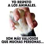 #NoEntiendo a los que maltratan o no respetan a los animales. http://t.co/WY97jo9DJD