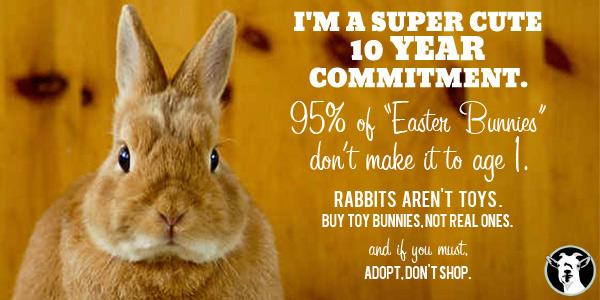 What You Need to Know Before Bringing Home an #Easter Bunny http://t.co/uXeJzD6939 #vegan http://t.co/NfM73ZXW4o
