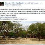 Comienzan los preparativos para el traslado del #ÁrbolDeCaucho #SantaMarta http://t.co/tAInnmXtTH