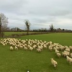 Farmer herds sheep with a drone in latest sign of robots taking over http://t.co/JuaEXHzgi2 http://t.co/EaXl2AvCTz