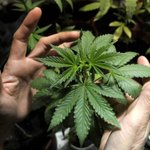 Primeira Igreja de Cannabis pode ter sido aprovada nos EUA por erro. http://t.co/0nsua84ois http://t.co/rhkt1YBaZT