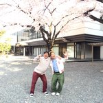 """""""@ariyoshihiroiki: 満開。。。 http://t.co/YEnyB7JzM1""""竹山はん🌸(;_;)/~~~"""